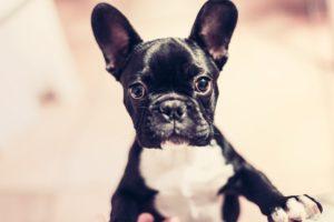 Bóle stawów u psa – suplementy na stawy